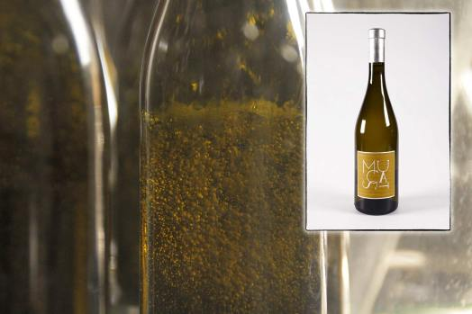 Infographie pour la page de présentation du muscat de Rivesaltes, vin doux du Mas des Caprices, par Serge Briez pour Cap Médiations 2012