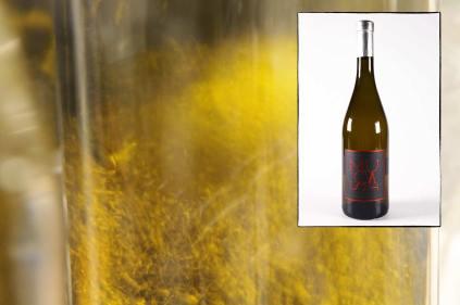 Infographie pour la page de présentation du muscat de Noël, vin doux du Mas des Caprices, par Serge Briez pour Cap Médiations 2012