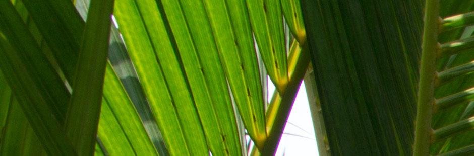 Bandeau d'entête Emergence Beauté pour mise en ambiance du site de ce Spa urbain à Avignon, Photographie Serge Briez pour Cap Médiations