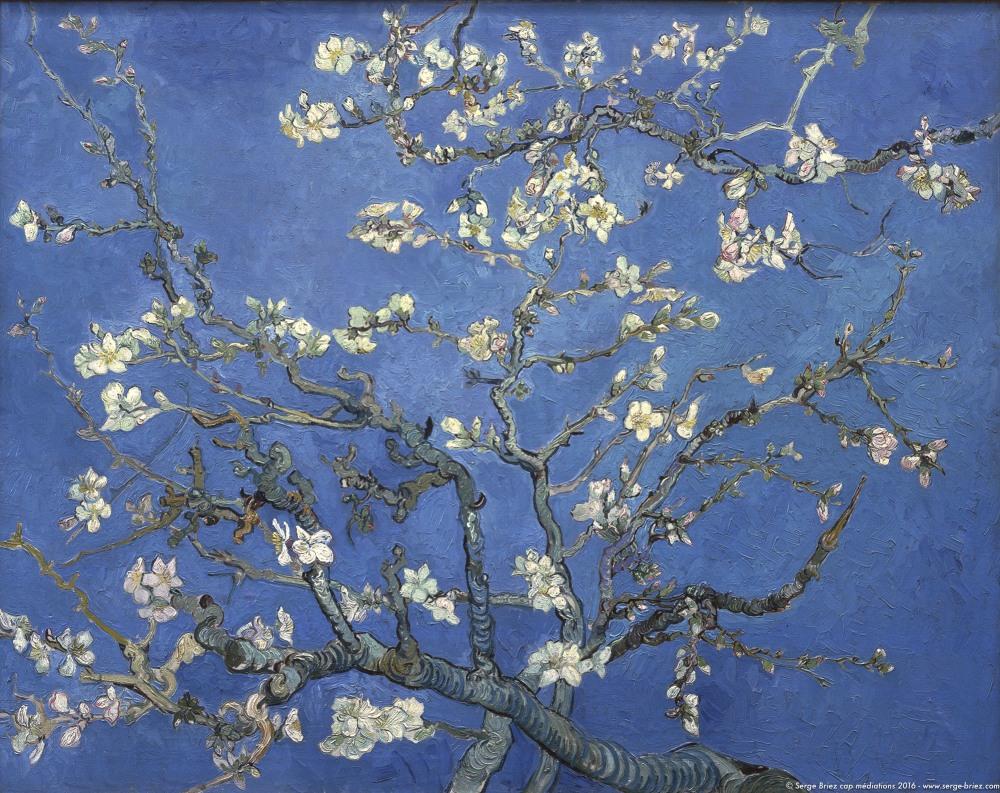Vincent van Gogh, les amandiers en fleurs, photo Serge Briez®